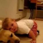 赤ちゃんのお世話をする犬!