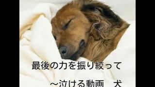泣ける犬動画