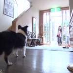 「きょうのわんこ」の動画!