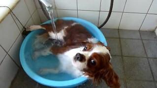 お風呂に入る犬!