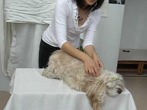 犬のマッサージ動画